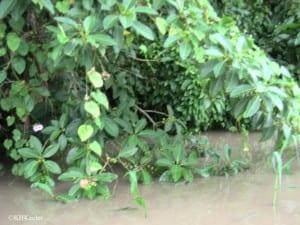 photo of area of Peruvian Amazon plant checklist