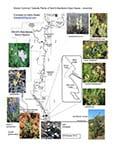 Plant checklist for Devil's Backbone Natural Area