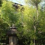 tall bamboo, edge of garden in Tokyo