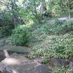 rocky slope, Tokyo garden