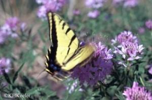butterfly-linkspage