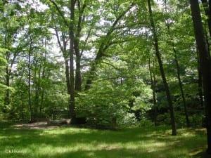Ohio forest