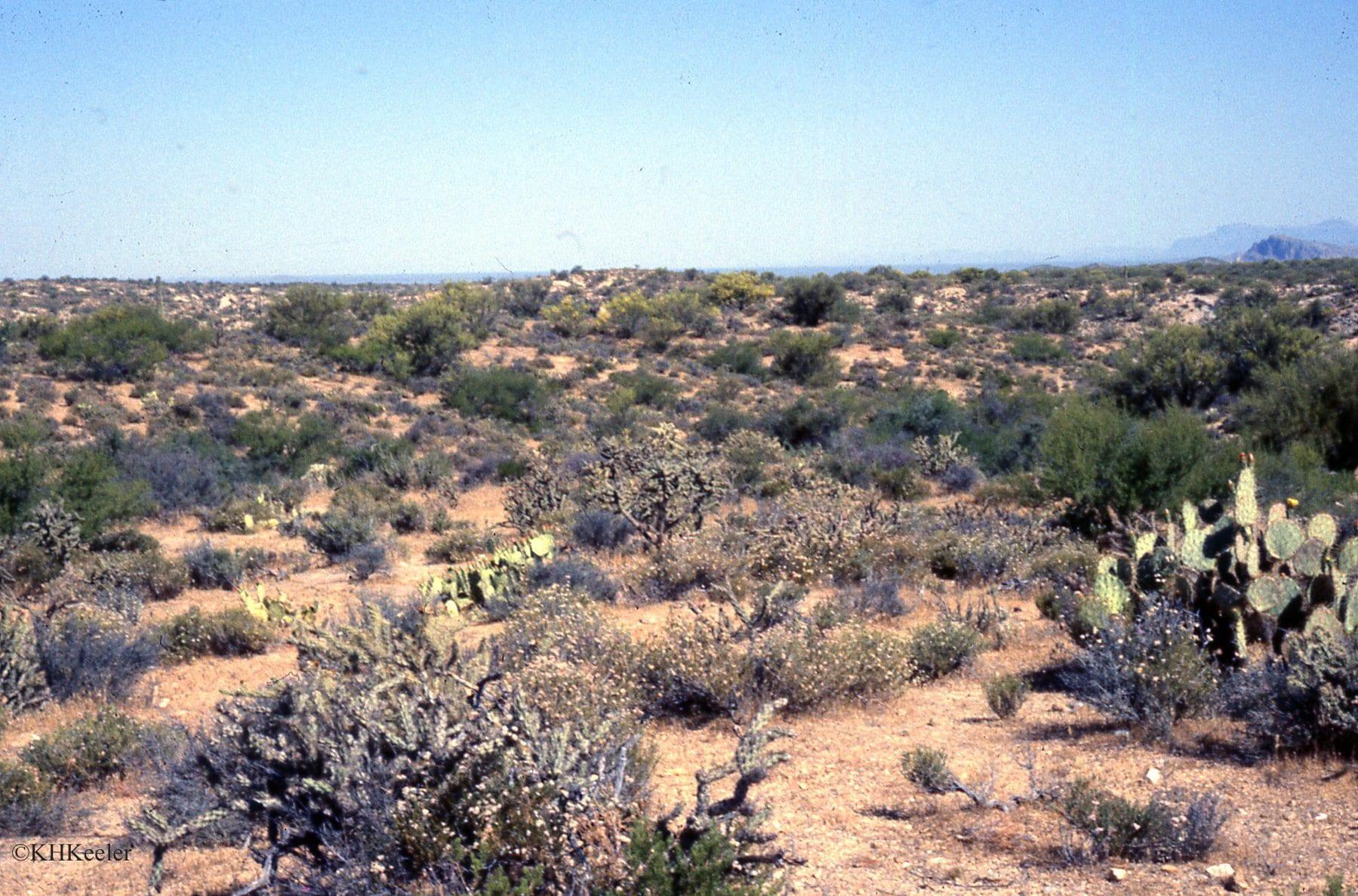 Lower Sonoran desert