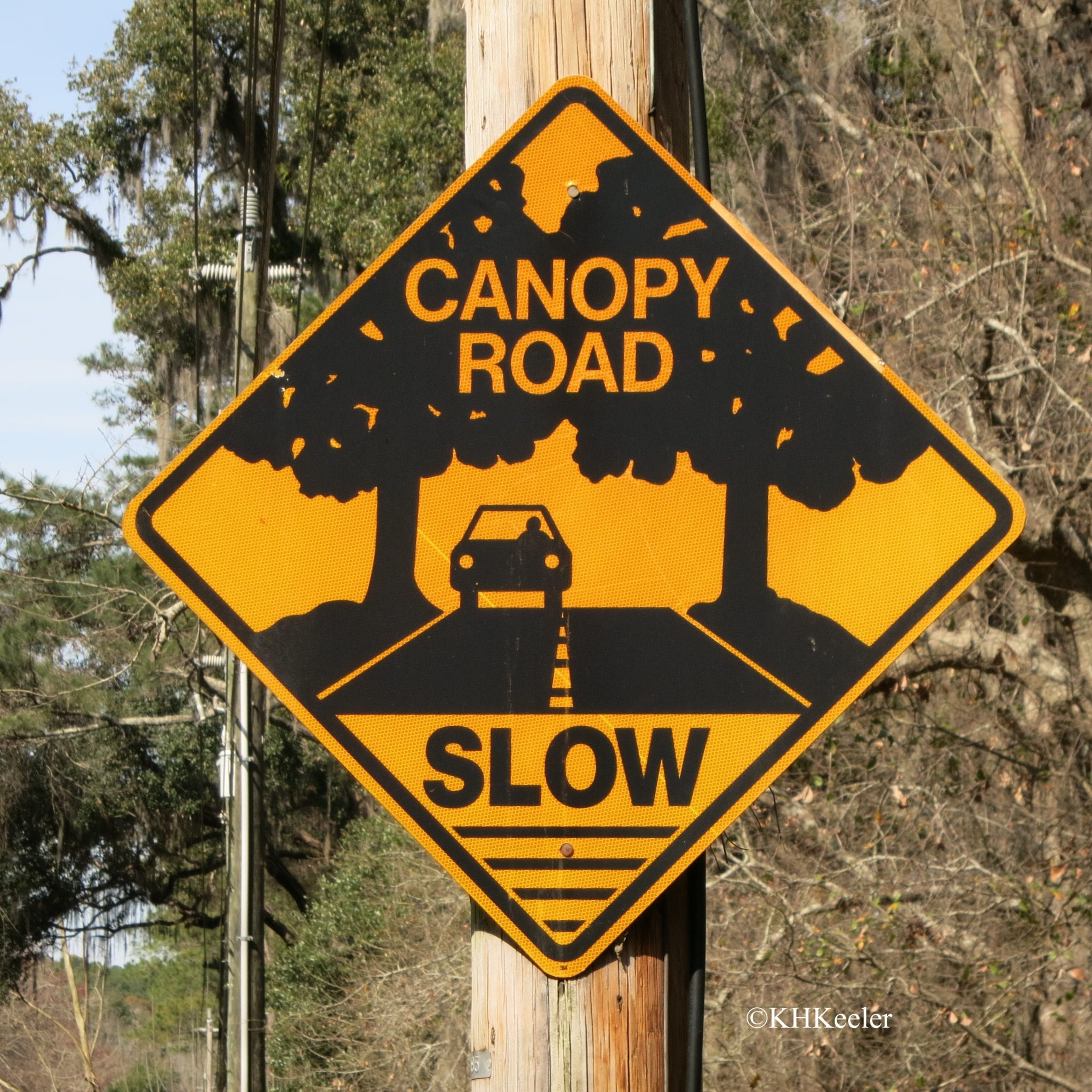 caution canopy road