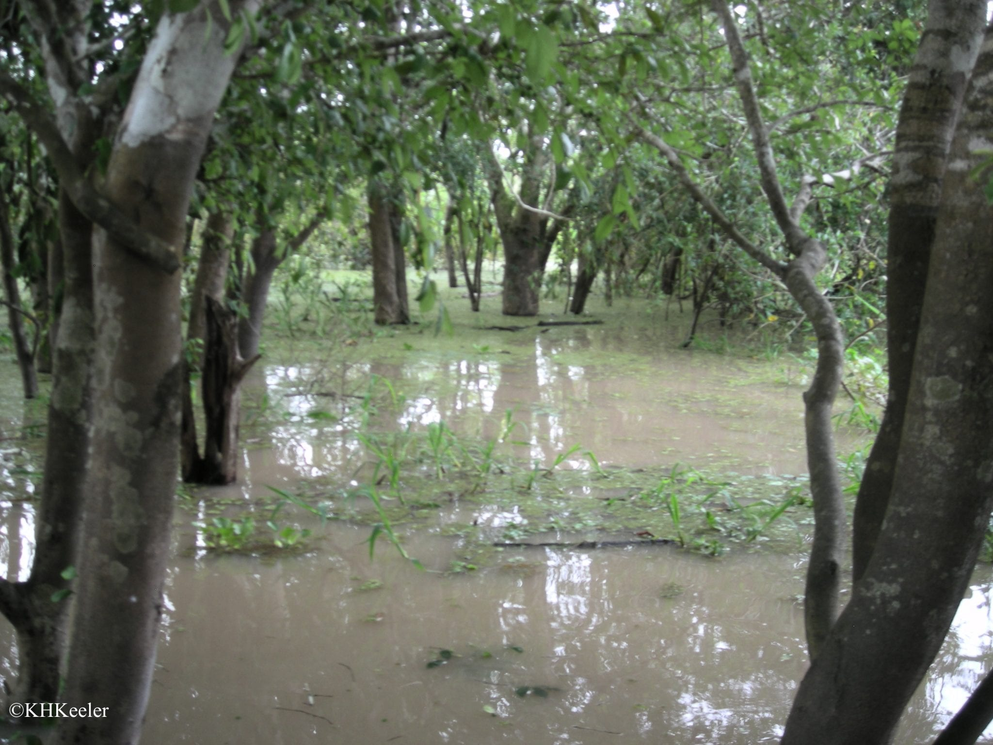 flooded Amazon forest
