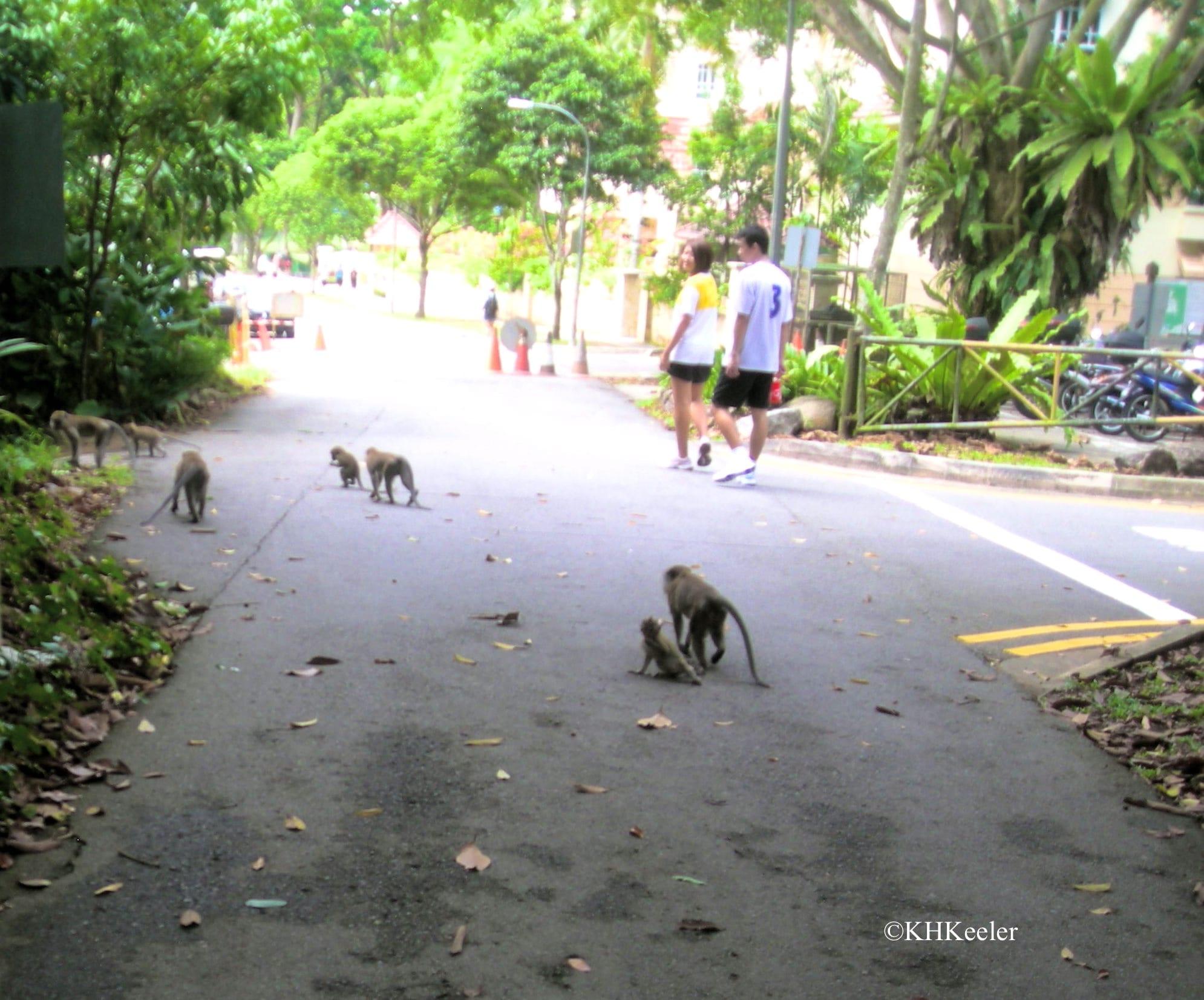 Singapore park