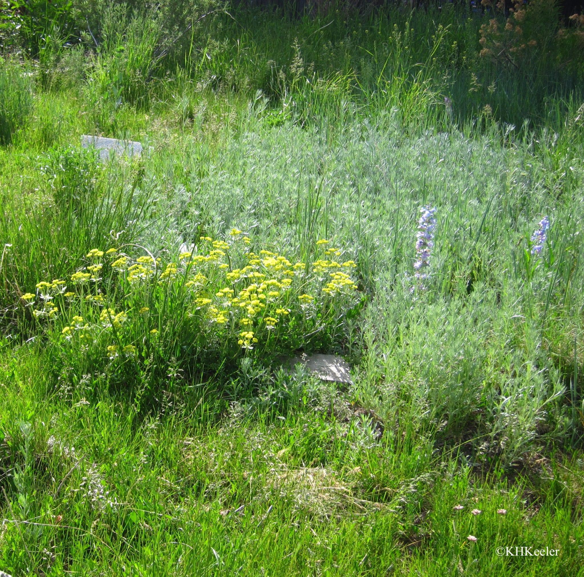 Grassland in spring