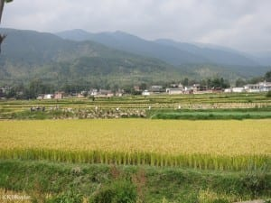 Rice fields, Dali, Yunnan